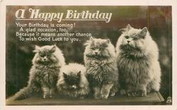 A HAPPY BIRTHDAY four white Persian cats on a bench facing front