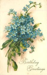 BIRTHDAY GREETINGS  blue forget-me-nots