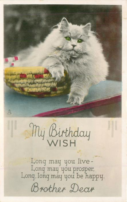 MY BIRTHDAY WISH white Persian cat in basket  BROTHER DEAR