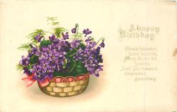 A HAPPY BIRTHDAY  basket of violets