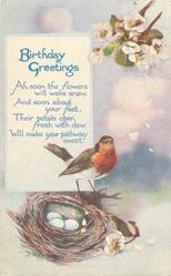 BIRTHDAY GREETINGS  robin, three eggs
