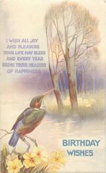 BIRTHDAY WISHES  kingfisher, primroses, trees