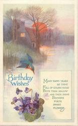 BIRTHDAY WISHES  kingfisher, violets, setting sun