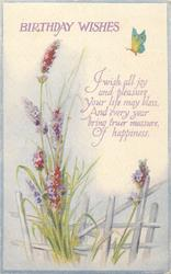 BIRTHDAY WISHES  lavender, butterfly