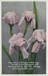 BIRTHDAY GREETINGS  four pink irises