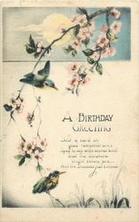 A BIRTHDAY GREETING  kingfishers