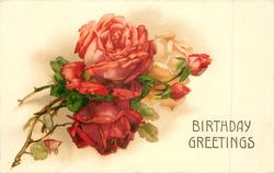 BIRTHDAY GREETINGS  roses