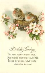 BIRTHDAY  GREETING    two robin chicks on nest in wild-roses