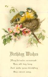 BIRTHDAY WISHES    two blue-tit chicks on nest in wild-roses