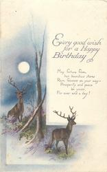 EVERY GOOD WISH FOR A HAPPY BIRTHDAY  deer