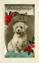BIRTHDAY GREETINGS  terrier & roses