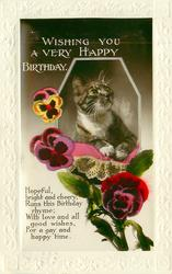 WISHING YOU A VERY HAPPY BIRTHDAY  cat & pansies