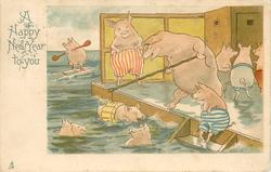 A HAPPY NEW YEAR TO YOU  pig family bathes in the sea