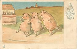 A MERRY CHRISTMAS TO YOU  three pigs dance on road observed by others from stye