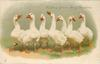 WISHING YOU A MERRY CHRISTMAS seven geese more or less in a line, on grass
