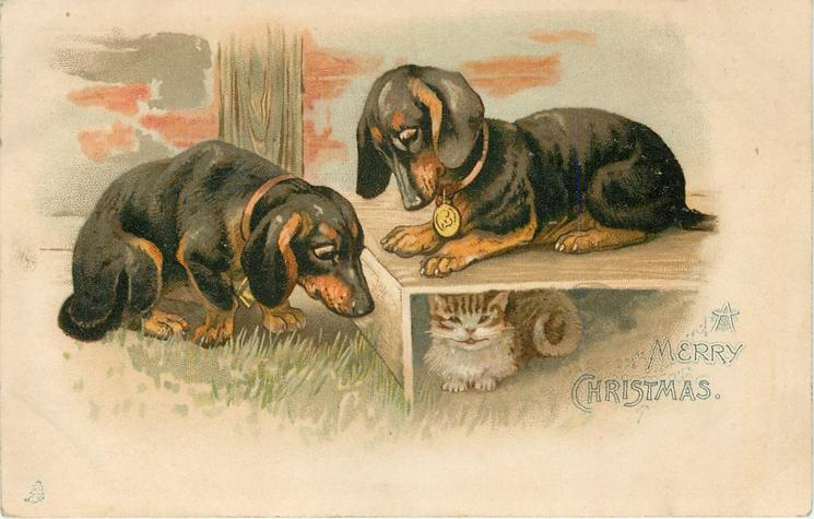 A MERRY CHRISTMAS  two dachshunds watch kitten under step