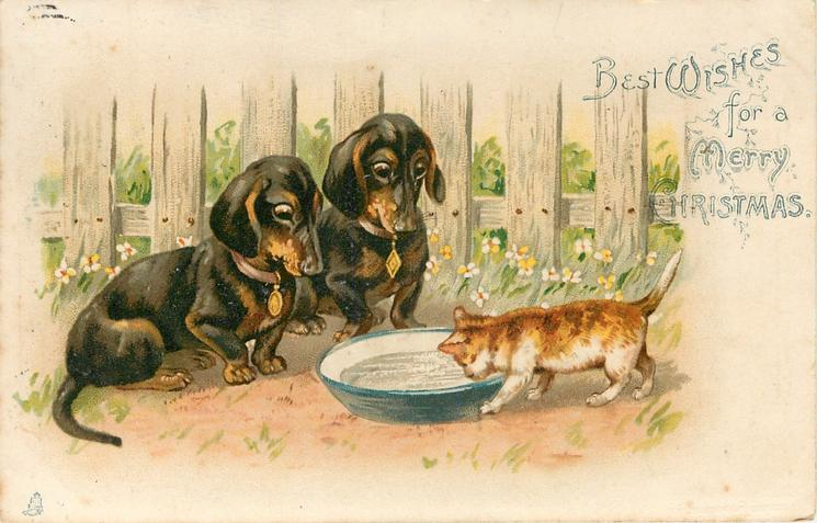 BEST WISHES FOR A MERRY CHRISTMAS  two dachshunds watch kitten drink