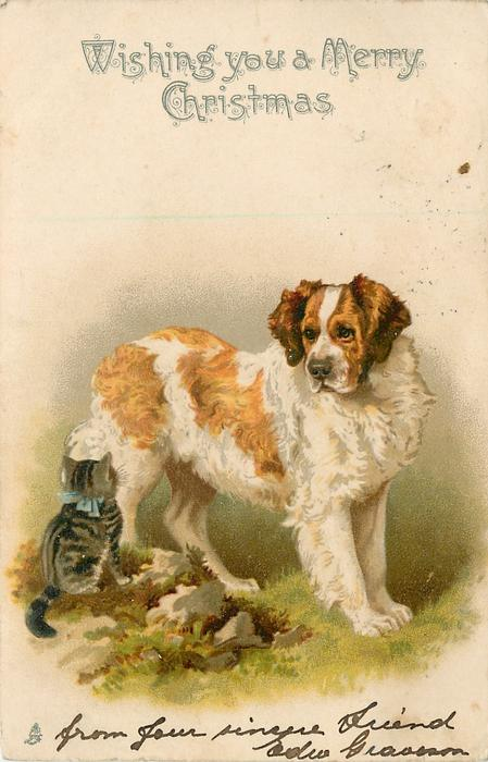 WISHING YOU A MERRY CHRISTMAS  tiny kitten sits looking up at large st. bernard