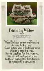 BIRTHDAY WISHES FOR TUESDAY two Persian kittens in basket