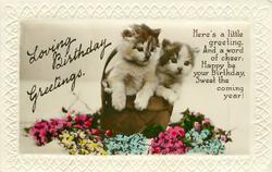LOVING BIRTHDAY GREETINGS  two kittens in basket