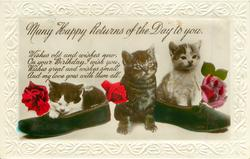 MANY HAPPY RETURNS OF THE DAY TO YOU  three kittens, two slippers, roses