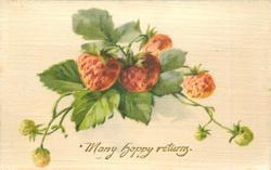 MANY HAPPY RETURNS in gilt,  strawberries