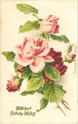 WITH BEST BIRTHDAY WISHES in gilt,  roses