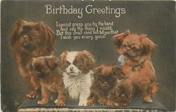 BIRTHDAY GREETINGS  six pekingese dogs