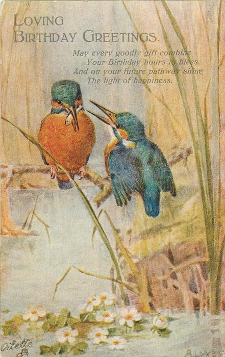 LOVING BIRTHDAY GREETINGS  kingfishers