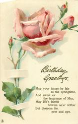 BIRTHDAY GREETINGS  pink rose & buds