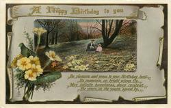A HAPPY BIRTHDAY TO YOU  primroses