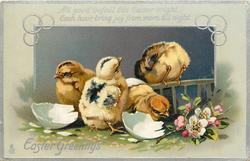 EASTER GREETINGS  with verse, four newly hatched chicks