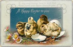 A HAPPY EASTER TO YOU with verse, four chicks just hatched, daisies