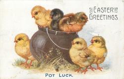 POT LUCK  six chicks, three on rim of pot, three around