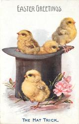 THE HAT TRICK  four chicks, three in top hat