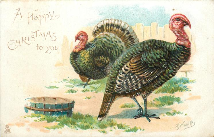 A HAPPY CHRISTMAS TO YOU  two turkeys, water tub left