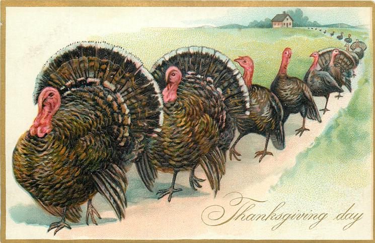 row of turkeys walking to left, two large males lead, house at end of line