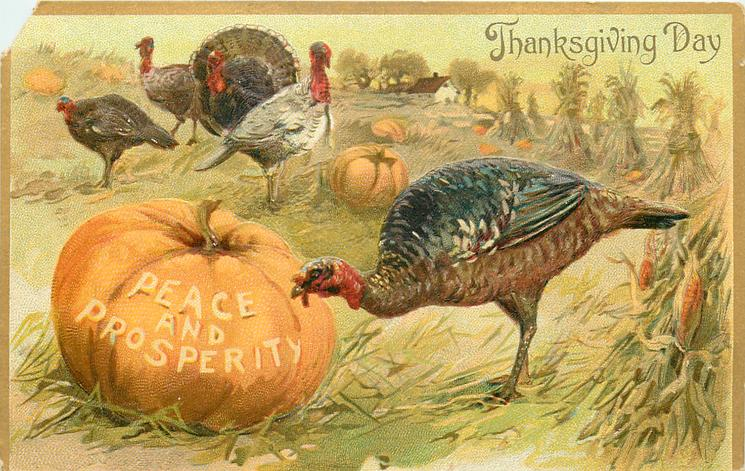 five turkeys in field, one pecks at large pumpkin with PEACE AND PROSPRITY carved on it