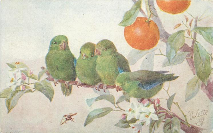 four green finches on orange tree