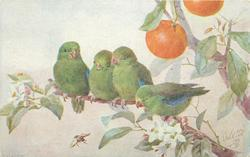 four green finches on orange tree