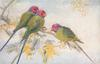 three green parakeets with pink heads, in yellow flowered acacia
