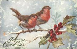 two robins on a snowy branch, holly right, snowing