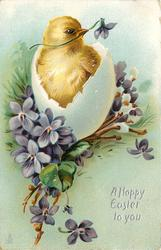 A HAPPY EASTER TO YOU  chick in broken egg, violets