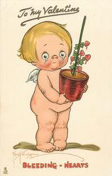 TO MY VALENTINE  cupid cries carrying pot of BLEEDING-HEARTS