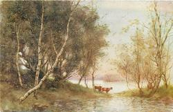 two cows on point of land between two lakes, birches left