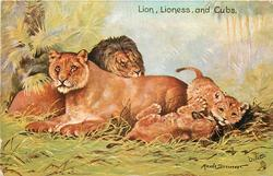 LION, LIONESS, AND CUBS