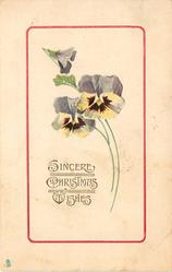 SINCERE CHRISTMAS WISHES  two white/purple pansies & bud