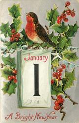 A BRIGHT NEW YEAR  holly with calendar and a robin