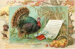 male turkey faces right to read THANKSGIVING PROCLAMATION, basket of apples lower right