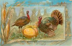 two turkeys standing by pumpkin inscribed  PEACE AND PROSPERITY